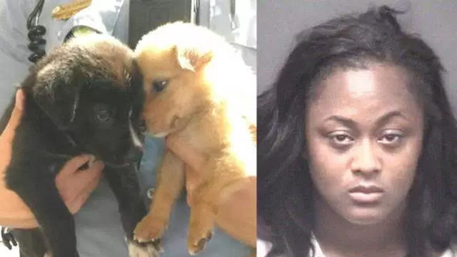 Woman charged after 2 puppies saved from hot car in NC