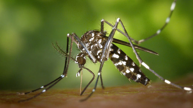 Mosquito spraying set following case of West Nile Virus in Anderson Co.