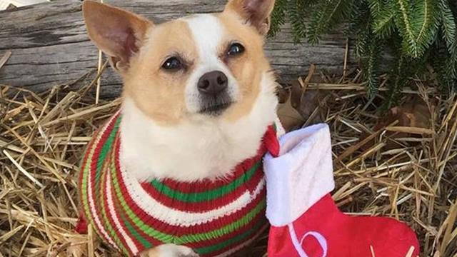 All adoption fees waived at Asheville Humane Society Dec. 8-9