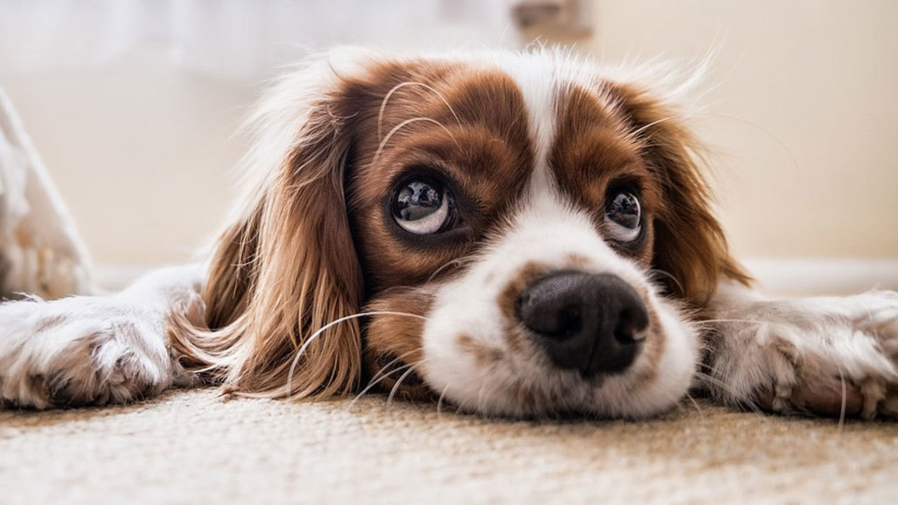 Recall Issued For 9 Dry Dog Food Brands