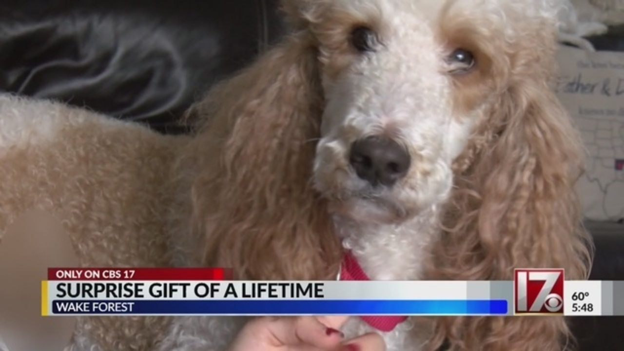 Image of: Flying Wspacom Nc Girl Whose Family Was Killed Receives Emotional Support Dog