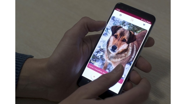 New app lets dog lovers swipe right for perfect pet match